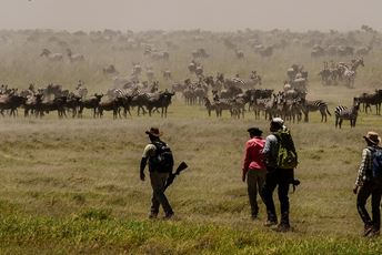 Tanzania - Walking safari Lake Manyara wildebeest - Wayo.jpg