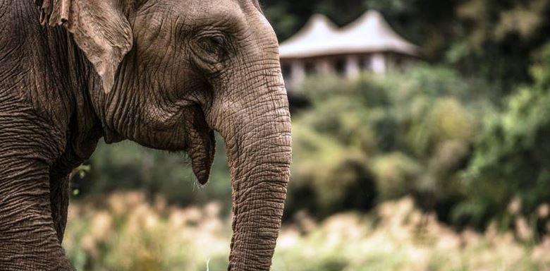 FourSeasons - Golden Triangle Tented Camp - elephant sanctuary.jpg
